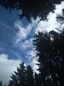 вк поляна небо