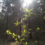весна на поляне