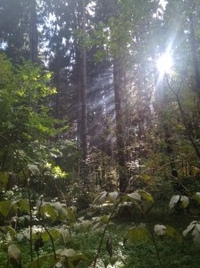 вк лес